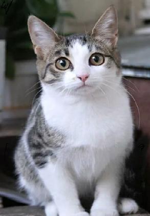 Почему кошки кусают вам руку?